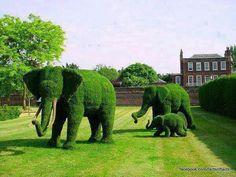 #elephant #animal #hedges