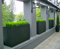 Greenscape Design Vanilla Grass Exterior Steel Planters with Cedar Topiaries in Zinc Pots 2