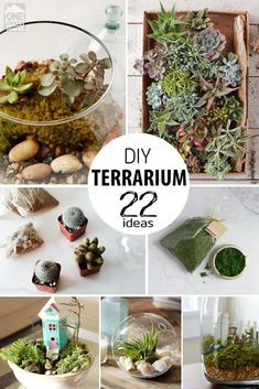 Ways to Make a Terrarium Bring nature inside with your very own ecosystem! These 22 Ways To Make a Terrarium will help you along the way!Bring nature inside with your very own ecosystem! These 22 Ways To Make a Terrarium will help you along the way! Terrarium Design, Terrarium Cactus, Build A Terrarium, How To Make Terrariums, Making A Terrarium, Best Terrarium Plants, Succulents Garden, Planting Flowers, Indoor Garden