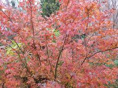 Autumn Magic at home.