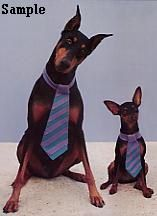 ♥ miniature pinschers - the small one looks like our TURBO!