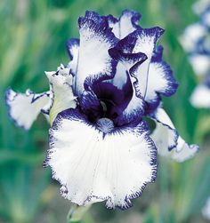 """Orinoco Flow 