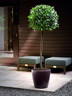 CLASSICO with irrigation system: less frequent watering and better plant growth! Green Office, Office Plants, Plant Growth, Cool Plants, Irrigation, Compost, Indoor Plants, Roots, Planter Pots