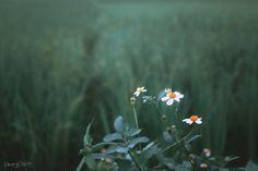 夏の沁 - 植物, 花卉, 小清新, 色彩, 佳能, 大光圈 - 咸魚Henry - 图虫摄影网
