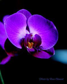 Resultado de imagem para beautiful flowers in the world