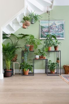 Want to really learn how to care for a fiddle leaf fig? Warning: It's not easy to keep this greenery alive—but it is totally doable. Here, two experts share all their tips and tricks for keeping a fiddle leaf fig thriving in your home. Decor, Interior, Indoor Planters, Home, Indoor Garden, Green Plants, Plant Decor, Plant Life, Indoor Plants