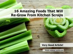 16 Amazing Foods That Will Re-Grow From Kitchen Scraps