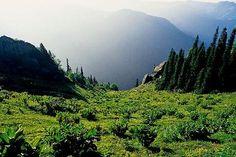 Balıkesir - Edremit / Kaz Dağları Milli Parkı ( Kazdağı National Park )