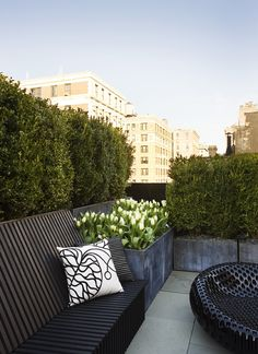 rooftop garden with boxwood hedge