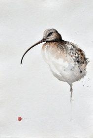 Curlew - Karl Martens - watercolor