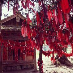muragon:  遠野の卯子酉神社。赤い布を左手だけで木に結ぶことができれば、縁結びのご利益があるそうです。 神社隣接の家のオジ...