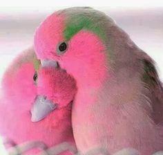 Lovebirds ✨✨