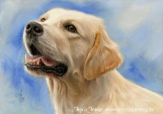 Labrador Retriever - Pastel drawing by Angela Franke