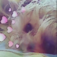 Segunda foto del día #Animal #Snapchat #Dog