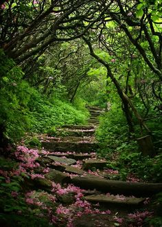 .Up the steps and through the green to a place I'm sure is worth climbing for