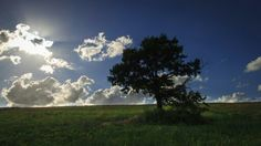 Landscape in Roman countryside. Photo by Piero Persello #tree #field #green #sky #clouds