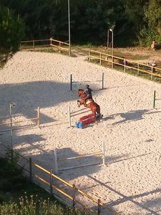 Caballo de salto Show Jumping, Horses For Sale, Barcelona Spain, Equestrian