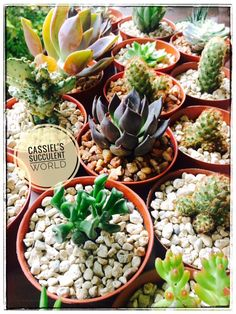Want to grow great cacti, airplants and succulents?... We have a wide variety of well loved plants that come in a range of colors, shapes and sizes.   You can grow these plants to give color to your balcony, courtyard at home or at the office and they don't require much attention and they're very affordable too, making them the perfect plants for your collection or as gift items, souvenirs and giveaways for loved ones and friends.   Contact us today for your orders at 09421869629. Perfect Plants, Cebu, Air Plants, Cacti, Giveaways, Balcony, Succulents, Career, Range