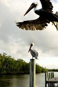 Everglades City, Florida! (©isabelpousset)