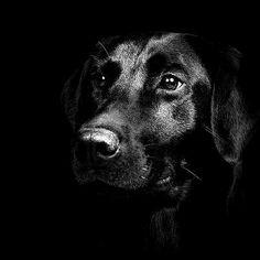 chien noir
