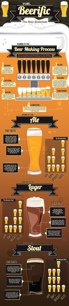 Types of Beer and Essentials Infographic