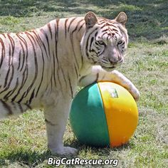 Cameron and Zabu got a new ball.