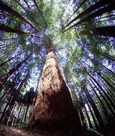Redwood Forest...I can't believe I'm going to school in the redwoods!
