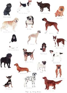 Magma x Polly Horner 'Dog Chart' print. Just bought this and can't wait to hang it! Red Wall Art, Paper Wall Art, Print Pictures, Dog Pictures, Dog Chart, Dog Poster, Texture Art, Beautiful Dogs, Dog Design