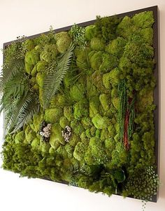 zielone-sciany
