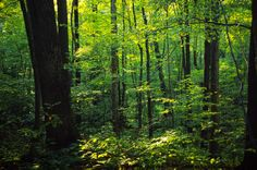 The Carolinian Forest in Point Pelee National Park -beautifully lit up