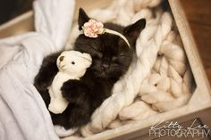 Photographer Does Typical Newborn Photoshoot … But With A Kitten