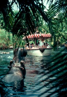 Disneyland - Adventureland - Jungle Cruise