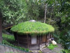 Roof lawn on my yurt... great insulation and just looks damn fine