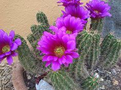 Floreciendo a principios de mayo