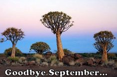 Namibia Safari and Lodges - Gondwana Collection Desert Tour, Main Attraction, Tree Forest, Round Trip, Nature Reserve, Lodges, Safari, National Parks, Country Roads