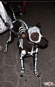 chiens peinture | halloween, dog, chien, squelette, deguisement, costume