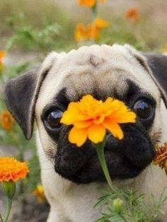 """I was smellin' da flowers and missed!"""