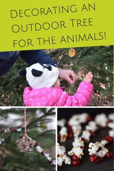 decorating a outdoor tree for the animals