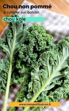 7 choux qui poussent en pot et jardinière sur balcon - Mon Petit Balcon Le Chou Kale, Pots, Broccoli, Cabbage, Planters, Herbs, Vegetables, Cooking Kale, Easy Plants To Grow