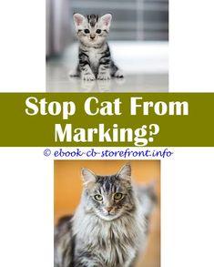 3443 Best Cat Spray Deter Images In
