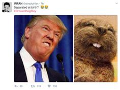 Ground hog & Trump