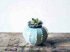Handmade ceramic petit succulent planter flower by OlisCupboard, $19.00