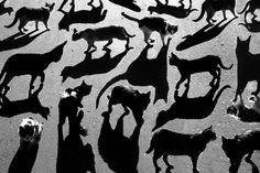 Cat Shadows