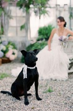 lace ribbon tie for wedding dog see more at http://www.wantthatwedding.co.uk/?p=45209