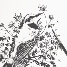 """teaganwhite: """"birds have been singing all night long """" Art Assignments, Keep Your Chin Up, Nature Illustration, Flowers Nature, Traditional Art, Singing, Birds, Ink, Night"""