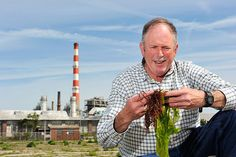 Using seaweed to absorb nutrient pollution. Charles Yarish, professor of Ecology & Evolutionary Biology, collects seaweed near an electric power plant along Long Island Sound in Bridgeport. Photo by Peter Morenus