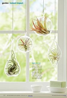Plant Display Ideas Love air plants, but not sure how to display them? Get inspired by these unique air plant creations.Love air plants, but not sure how to display them? Get inspired by these unique air plant creations. Air Plant Display, Plant Decor, Hanging Air Plants, Indoor Plants, Indoor Herbs, Diy Hanging, Plantas Indoor, Air Plants Care, Decoration Plante