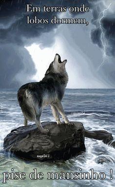 The Black Wolf Society - Wolf's - Community - Google+
