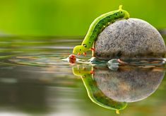 Caterpillar reflection