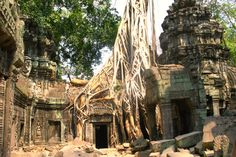 Angkor Wat Tomb Raider Wurzel